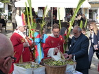 Blessing the palms 2014